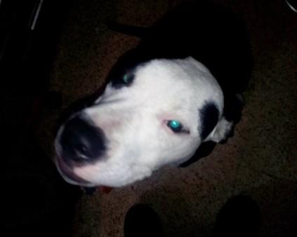 Uno de los perros tutelados por la Protectora.